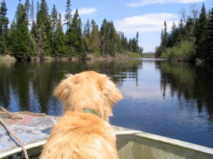 Gordie Howe on the Moose River
